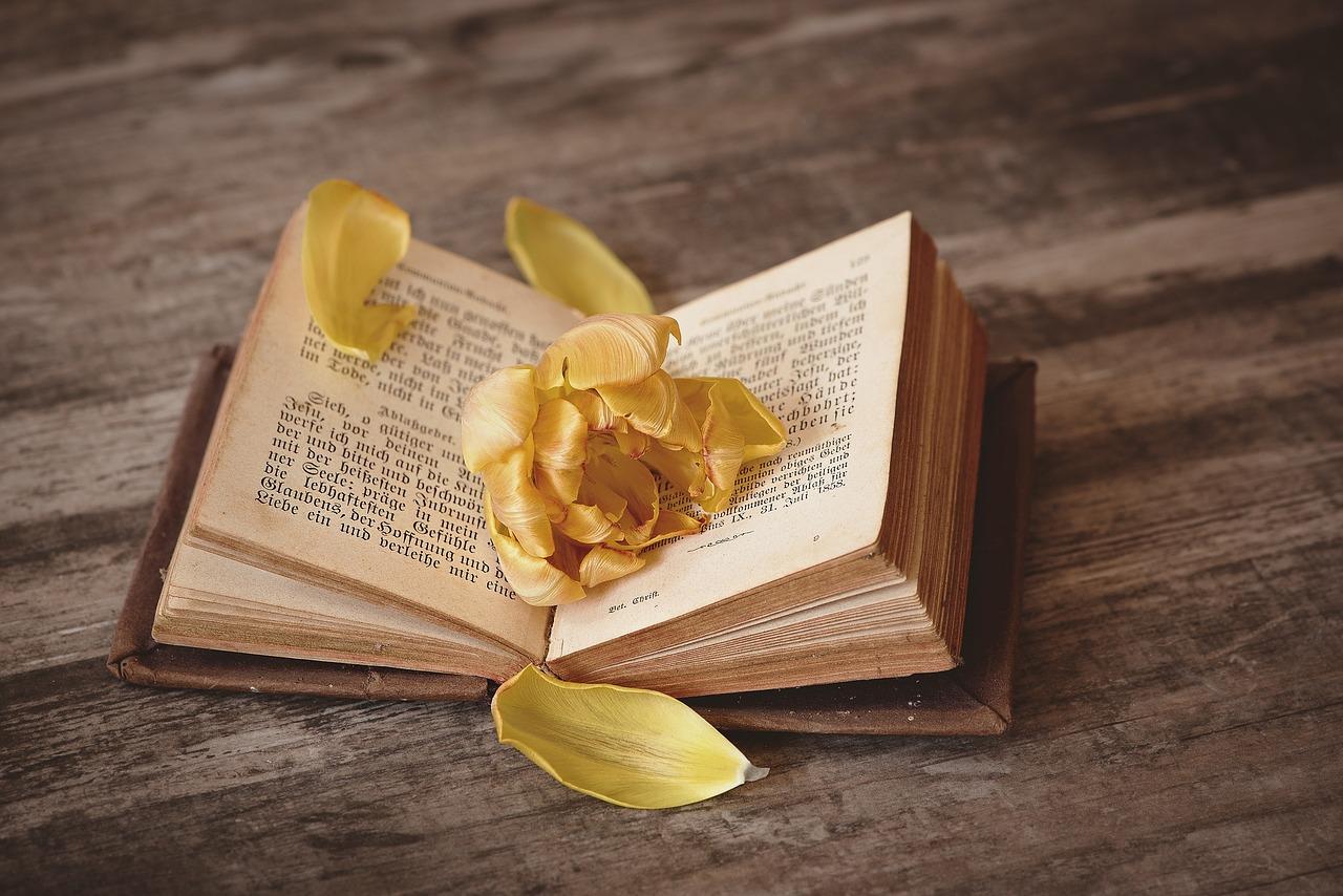 読書が続かない?本をたくさん読むための5つの方法